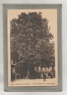 CPA - (01) - DIVONNE-les-BAINS - Thème: Arbre - Aspect Du Marronnier En 1910 - Divonne Les Bains