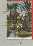 CARTOLINA NV ALGERIA - SCENES ET TYPES - La Recolte Des Dattes - 9 X 14 - 1929 - Scene & Tipi