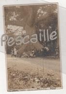 CARTE PHOTO ? ANIMEE ARBRE MAPOU CHEVALIER AUX GONAÏVES - HAÏTI - L. DORET - CIRCULEE EN 1907 - Haití
