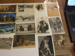 LOT D UNE COLLECTION DE 243 CARTES POSTALES ANCIENNES ET SEMI MODERNES THEMES ANIMAUX CHEVEAUX OISEAUX CHATS CHIENS - Cartes Postales