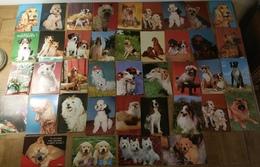 CP Chiens Lot 40 Cartes Teckel Caniche Cocker Berger Etc - Dogs