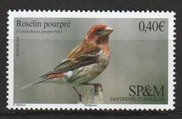 Saint Pierre Et Miquelon - N°1148 ** (2016) Oiseaux - St.Pierre Et Miquelon