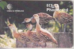 ANTIGUA & BARBUDA(chip) - Birds, West Indian Tree Ducks, Chip GEM6b, Used - Antigua And Barbuda