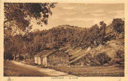 Yakouren - La Forêt - Algeria