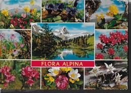 FLORA ALPINA - EDIZ. CECAMI #211 - VIAGGIATA NON TIMBRATA - Fiori