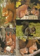 Eekhoorn / écureuil / Squirrel : --- 15 Cards. - Dieren