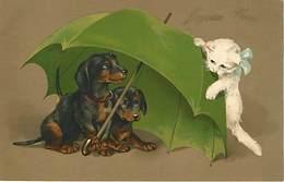 Chats Et Parapluie  Lot De 3 Cartes Chat  Chiens Chiens - Gatti