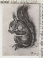 ANIMALS - ANIMAUX CONIGLIO RABBIT LAPIN TOBIAS STIMMER - Other