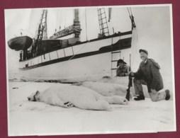 020220A - PHOTO DE PRESSE 1959 - CHASSE OURS BLANC Oslo Norway Arctic Safari Expedition Ship Havella Of Tromsö - Sport
