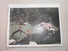 Carte Postale Ancienne JARDIN ZOOLOGIQUE ANVERS - Birds