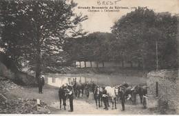 29 - BREST - Grande Brasserie De Kérinou - Chevaux à L' Abreuvoir - Brest