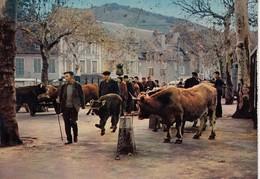 SAINT-GENIEZ D'OLT: Sur Le Foirail (foire Aux Bovins) - France