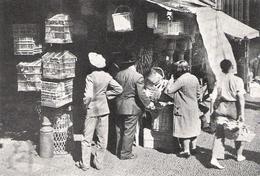PORTUGAL MADERE Cages à Oiseaux Au Marche Dé FUNCHAL   Document Original Américain De 1934 - Vieux Papiers