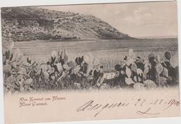 8783 Eb.   Israele - Israel - Mont Carmel - 1900 - FP VF - Italian Stamp - Israele