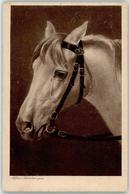 53151034 - Pferd - Caballos