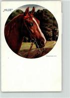 53151074 - Pferd - Caballos