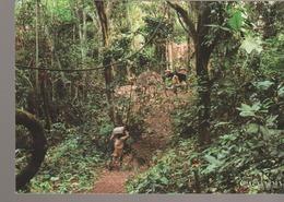 C. P. - PHOTO - GABON TRADITIONNEL - L'ENTREE D'UN CAMPEMENT PYGMEE - A 771 M - ENFIN NOUS APPROCHIONS DU CAMP PYGMEE TA - Gabon