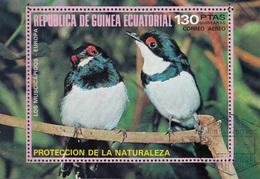 Guinea Equatoriale 1976 Bf. 236A Birds Los Muscicapidos Platysteria Peltata Sheet Perf. CTO - Passeri