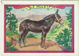 Image Le Mulet - Animales