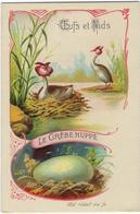 Image Oiseau  Oeufs Et Nids  La  Grebe Huppee - Animales