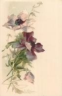 TOP 22 - CPA Original  Fleurs -  Signée  Catharina KLEIN - BE,  Voir Scan Recto Verso - Klein, Catharina