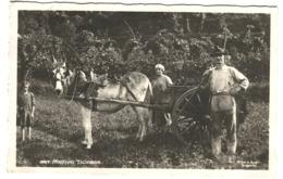 Motivo Rustico Ticinese - FAMIGLIA CON ASINO VERA FOTO DONKEY CARRIAGE 1928 - TI Tessin
