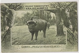 0090 Poland Towarzystwo Krajoznawcze Zubry - Poland