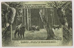 0091 Poland Towarzystwo Krajoznawcze Zubry - Poland