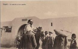 """1911/12-""""Guerra Italo-Turca,Tripoli-il Contratto Di Un Cavallo""""assolutamente Perfetta - Altre Guerre"""