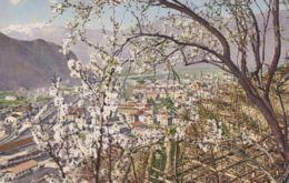1915ca.-Sudtirolo, Bolzano, Panorama Della Cittadina, Immagine Primaverile, Viaggiata - Bolzano (Bozen)