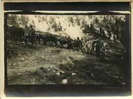 030220A - PHOTO MILITARIA 1914 18 - Guerre Montagne Attelage De Boeufs Pour Tirer La Pièce De Canon - Guerre 1914-18
