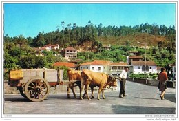 S.Pedro Do Sul - Carro De Bois - Attelage Boeufs - Oxen - Termas Portugal - Viseu