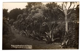 Post Card Photo Photography C.J. King St Mary Isles Of  Scilly Algeria And New Zealand Tresco G 40 - Scilly Isles