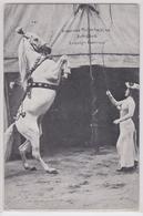 Cirque - Dressage De Cheval Dresseur Leipzig-Lindenau - Cirque