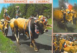 AGRICULTURE  Sur Les Monts D'Aubarc La Transhumance   (élevage Vache Vaches Cow Cows) *PRIX FIXE - Elevage