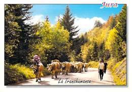 AGRICULTURE  Jura Retour De Pâturages   (élevage Vache Vaches Cow Cows) *PRIX FIXE - Elevage