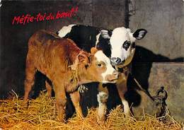 AGRICULTURE  Méfie Toi Du Boeuf   (élevage Vache Vaches Cow Cows) *PRIX FIXE - Elevage