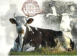 AGRICULTURE Normandie Vintage Vache Normande à La Robe Brune Et Blanche (élevage Vaches Cow Cows) *PRIX FIXE - Elevage