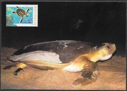 Australia/Australie: Intero, Stationery, Entier, Tartaruga A Dorso Piatto, Flatback Turtle, (Natator Depressus) - Tartarughe