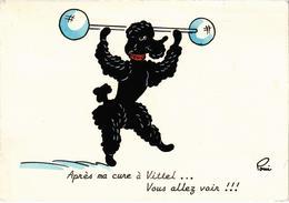 """FANTAISIE - Caniche Avec Altère -  """"Après Ma Cure à Vittel... Vous Allez Voir !!!"""" TT Rare - Illustration POMI - Posté - Fantaisies"""