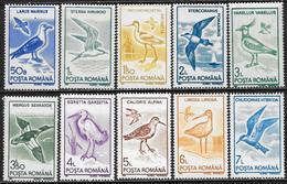Romania/Roumanie: Uccelli Diversi, Different Birds, Différents Oiseaux - Altri