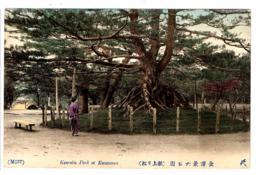 "KAMAZAWA """"1910"""" - KERROKU PARK, A GIANT TREE - M137 - Printed By TONBOYA ISEZAKICHIO YOKOHAMA JAPAN - JAPON - Giappone"