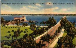 Florida Bradenton Stately Royal Palms Along Yacht Basin And Approach To Manatee River Bridge - Bradenton