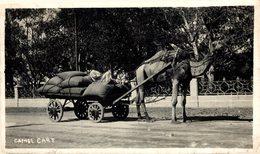 PAKISTAN. KARACHI. CAMEL CART - Pakistan