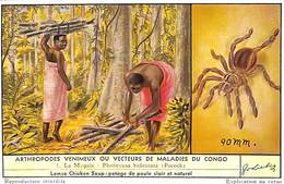 6 Chromos - Liebig - Arthropodes Venimeux Ou Vecteurs De Maladie Au Congo - S_1637 - Liebig