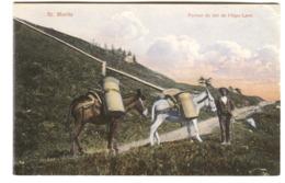 St. MORITZ PORTEUR DE LAIT De L'Alpe LARET Milchtrager Asino Donkey Env. 1908 - GR Grisons