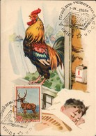 Russia - Soviet Union (now Ukraine), 'Farm Animals' Maximum Postcard. KIEV 1.9.1958. - Covers & Documents