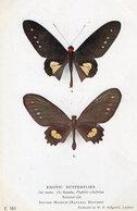 Papillo Chabrias Papilionidae Exotic Butterflies Antique British Museum Postcard - Mariposas