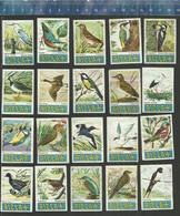 RIZLA VOGELS BIRDS OISEAUX  Issued In Belgium 1961 - Boites D'allumettes - Etiquettes