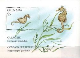 MDN-BK26-594 MINT ¤ GRENADA 1995 BLOCK ¤ SEE HORSE - MARINELIFE - FISH - SEALIFE - UNDERWATER WORLD - Fishes